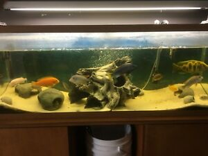 Fish tank, accessories and fish for sale