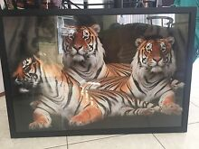 Large framed tiger picture Newcastle 2300 Newcastle Area Preview