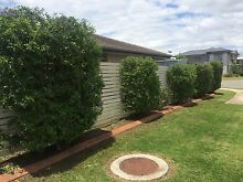 LAWN SERVICES FROM $20! Pimpama Gold Coast North Preview
