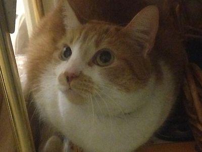 GREEN CAT GIFTS GARDEN HOME DECOR