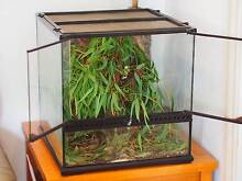 Exo Terra Terrarium + Stick insects x 19   = complete setup Box Hill North Whitehorse Area Preview