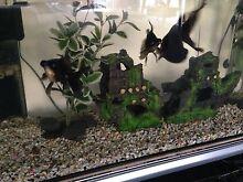 fish tank 3ft pump ornaments goldfish Cranbourne East Casey Area Preview
