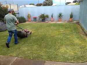 KISS MY GRASS!  Quality lawn mowing Fulham Gardens Charles Sturt Area Preview