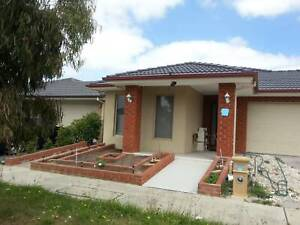 Room to let for Bachelors near Cardinia train station