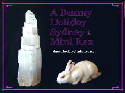 ★★★★★Mini Rex White Baby Bunny Rabbit For Sale ★★★★★ West Pennant Hills The Hills District Preview