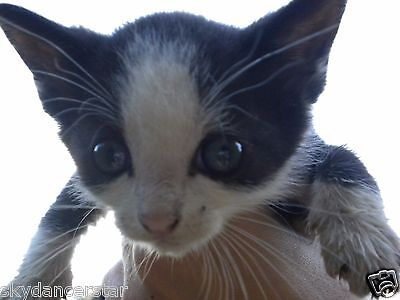Sponsor Trubbys Surgery Vet Care Remembrance Cat Rescue  Donation Rec Photo