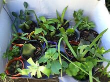 Box of mixed Plants Ingleburn Campbelltown Area Preview