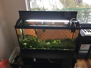 30gal fish tank with cover, light, auto feeder and fish