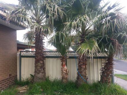 Palm Trees for sale  Noble Park Greater Dandenong Preview