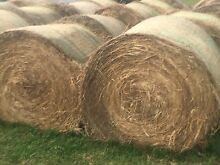 Grass Round Bales Luskintyre Maitland Area Preview