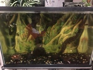 Fish and aquarium for sale must go asap since I am moving