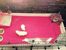 Guinea Pig Indoor C&C 2x4 Grid Cage + Stand Birkdale Redland Area Preview