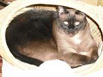 Camano Cats
