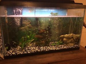 30 GALLON FISH TANK WITH EVERYTHING