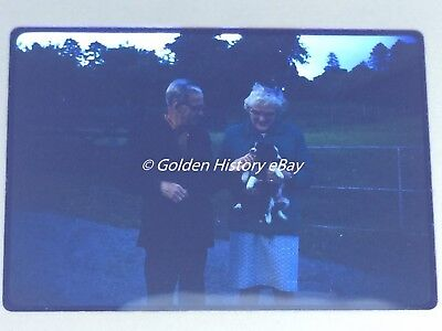 PUPPIES AT THREE WELLS FARM HOWEY 35mm SLIDE PHOTO PICTURE PHOTOGRAPH