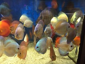 "EXTREME DISCUS ""Easter Weekend Specials"""