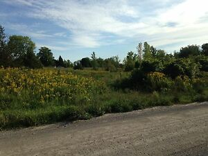Beautiful 5 Acre lot with woods and field by Trent River Belleville Belleville Area image 8