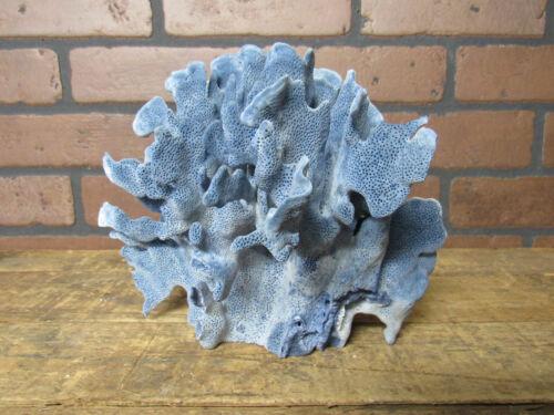 "Natural Genuine Light Blue Ridge Coral Home Decor 7"" x 8.5"" x8.5"" BL-531"
