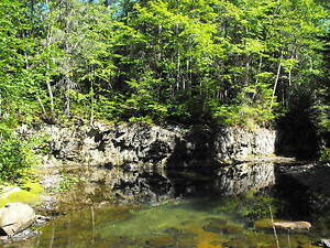 Camp and woodlot for sale