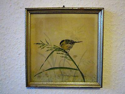 Schönes altes Vogel BILD handgemalt signiert, um 1950 im Holzrahmen verglast