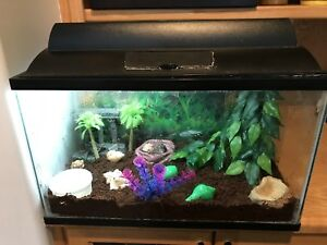 2 Hermit crabs and tank