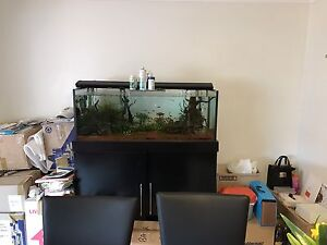 FREE 4ft fish tank aquarium and Stand (SOLD - PENDING PICKUP) Glenwood Blacktown Area Preview