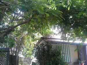 NEEDING HELP 2 CUT DOWN DANGEROUS TREES///THANX Mackay Mackay City Preview