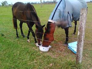 Beyond blue charity horse trek - donations please South West Rocks Kempsey Area Preview