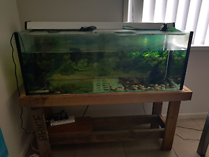 Oscar fish and fish tank Caboolture Caboolture Area Preview