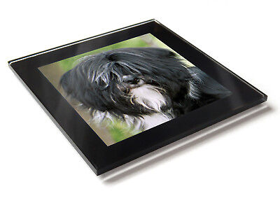 TIBETAN TERRIER Dog Puppy Premium Glass Table Coaster with Gift Box
