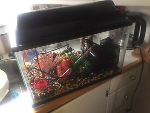 20 Gal tank full set up ready to go.