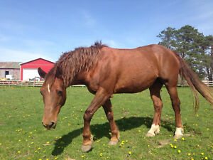 17 year old mare