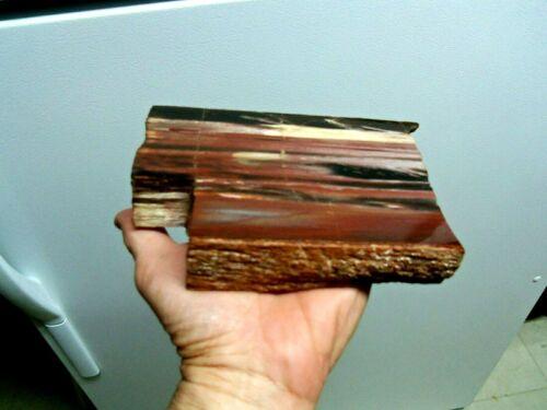 """Amazing """" Petrified Wood Slab in Matrix, 1 Side Polished"""""""