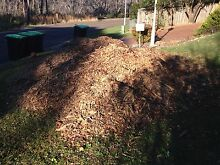 Free wood chips and mulch Frenchs Forest Warringah Area Preview