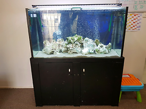 Fish tank - 4ft tank full set up EUC St Helens Park Campbelltown Area Preview