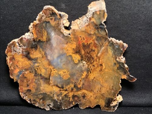 """~RW~~ EXCEPTIONAL  """"PETRIFIED WOOD ROUND"""" ~ GRASSY MT. ~  SALE!!!!!!!!!!!!!!!!!!"""