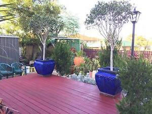 Building Material & Pots and Plants!!! Boondall Brisbane North East Preview