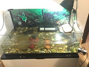 Turtles and Tank Full Set Up Newtown Inner Sydney Preview