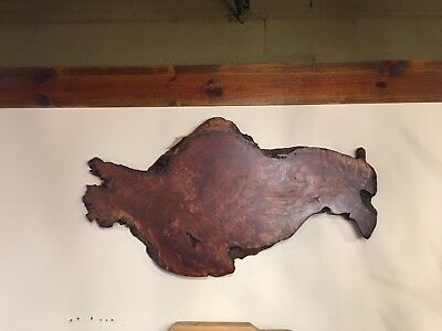 Live Edge Redwood Burl Wall Art #108/ DIY/Wood Slab](Diy Wood Wall Art)