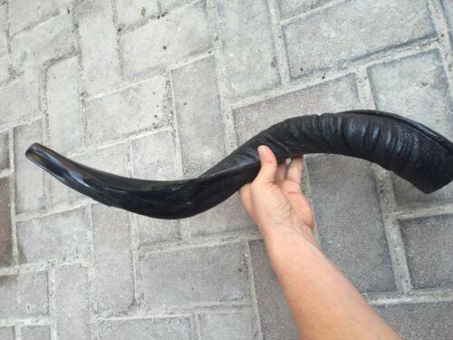 Yemenite Kudu Horn Shofar 20