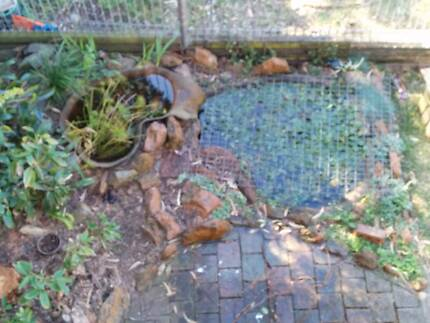 Complete Fish Pond - Fully Established with Fish and Plants Abbotsford Canada Bay Area Preview