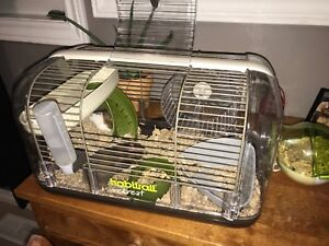 2 Hamsters in need of new home!