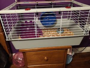 Hedgehog and Cage $300 OBO