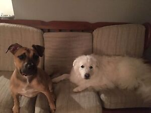 Looking for bachelor or one bedroom apartment (pet friendly)