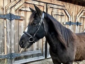 Cheval/jument 6 ans