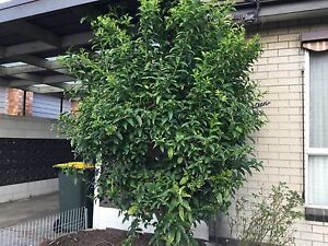 Plants and trees Sunshine Brimbank Area Preview
