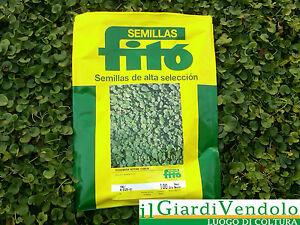 Dichondra repens top da 100 g per 7 mq erba per prato for Erba per prato che non si taglia