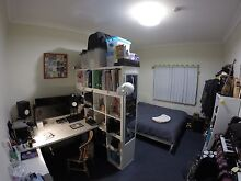 Master bedroom for lease in 3 bedroom house Leichhardt Leichhardt Area Preview