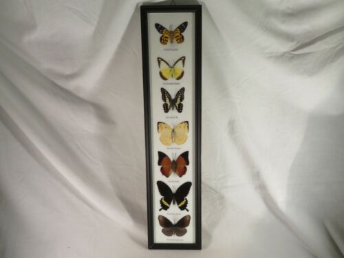 7 Real Framed Butterfly Moth Identified Labeled Specimens Mounted Framed Glass