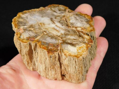 Perfect BARK! On This Polished Petrified Wood Fossil 336gr